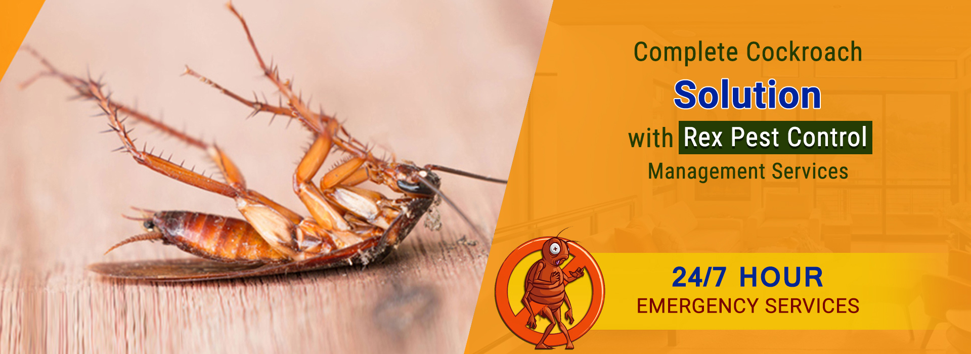 Cockroaches Pest Control Morbi